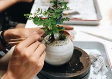 BONSAI ワークショップ ~Plant Styling with Dandy Farmer
